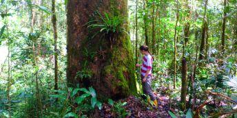 V Bruneji začali čeští vědci působit již v roce 2007 a od té doby se soustavně věnují výzkumu tropických lesů Bornea.