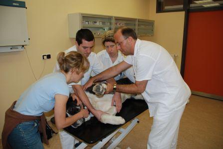 Vyšetření pacienta vambulanci.