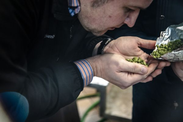 Tomáš Gregor checking the hops. Photo by author.