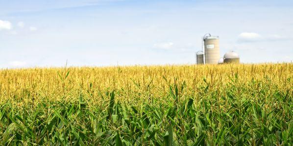 Využití technik genomového editování pro udržitelné zemědělství aprodukci potravin je podle vědců nyní omezené.