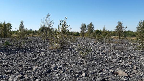 Krajina hald: Otevřená stanoviště bez vegetace jsou včeské krajině ojedinělá ačasto se na ně váže vzácná fauna.